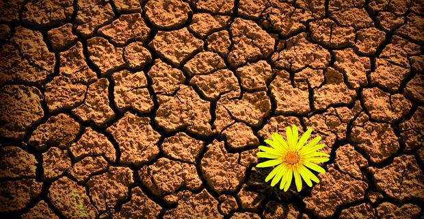 resiliencia-2