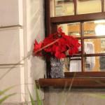 La tradicional planta de Navidad en la ventana de un restaurante