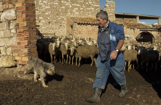 Ramón con su rebaño (Foto: Javier Martín/El País)
