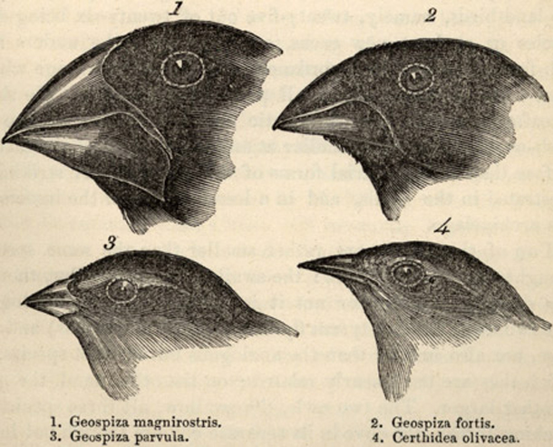 Darwin evolución ciencia fe