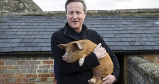 política personalización cerdo cameron